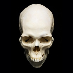 white real Skull with black background