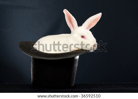 White Rex rabbit in black top hat on black background
