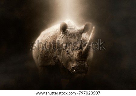 White rhino on a brown background with light on the body Сток-фото ©
