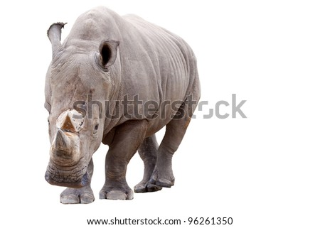 White rhino with isolated background and the cliped part. - stock photo
