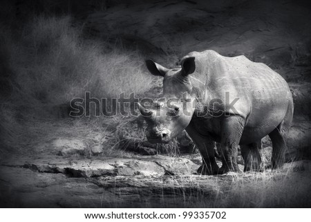 White Rhinoceros (Artistic processing)
