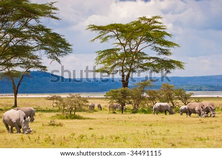 White rhinoceros grazing at lake Baringo in Kenya