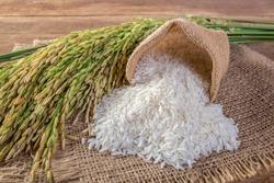 White rice (Jasmine rice)