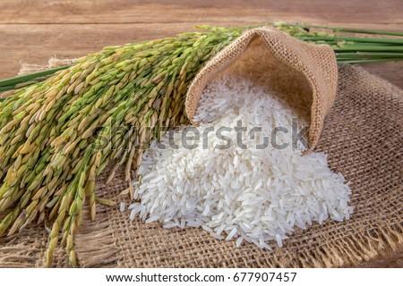 White rice (Jasmine rice) #677907457