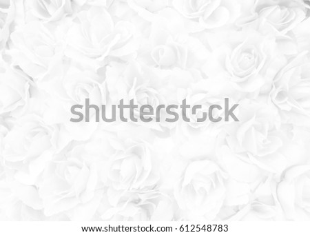 White Rose Background.
