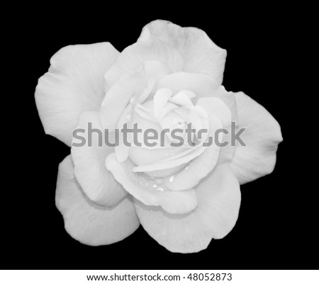 black and white rose backgrounds. Black And White Rose