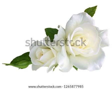 White rose flowers isolated on white background Stock photo ©