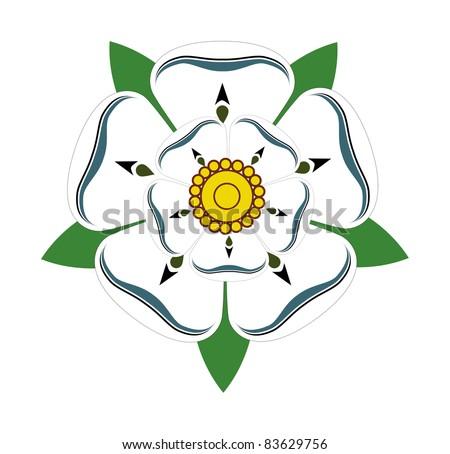 White Rose of Yorkshire isolated on plain background.