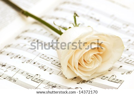 White rose on the musical notes page