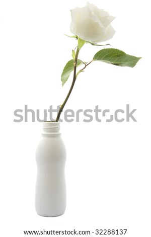 white rose on white background isolated