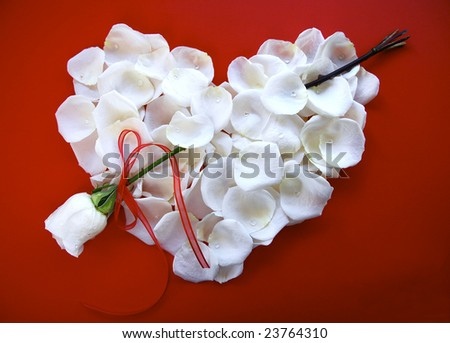 White Rose Petal Heart with rose arrow on Red Background