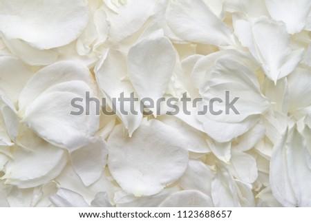 White rose petals. Rose petals background #1123688657