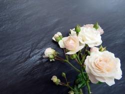 white roses on a dark background