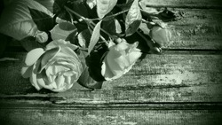 White roses on a wooden table. Stylized postcard in gray - green monochrome. Congratulations or expressions of regret. Copy space. Dark vignetting around the edges. Roses on wooden background