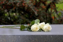 white roses on gravestone at municipal cemetery in Amsterdam, The Netherlands