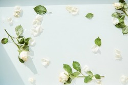 White roses on the water surface texture, white delicate background with white rose petals and leaves. Copy space. High quality photo