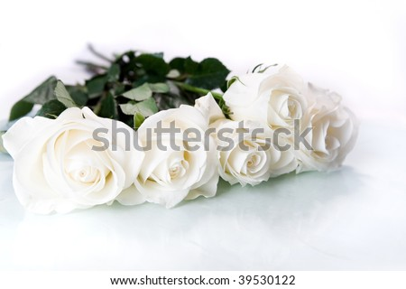 White roses on white ground