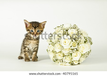 stock photo White roses wedding bouquet and a young cute cat
