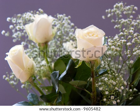 White Roses with baby\'s breath isolated against dark background; narrow depth of field