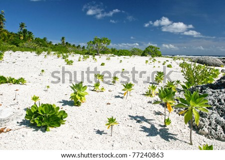 White sand on the tropical beach of Maupiti, French Polynesia, Society Islands