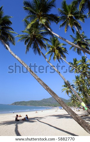 White sand tropical beach with coconut trees - Palolem beach, Goa state, India