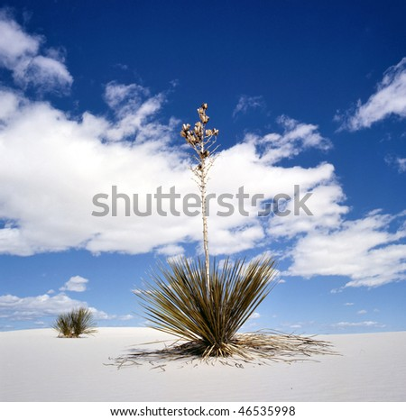 White Sands National Monument, New Mexico, USA with Yucca