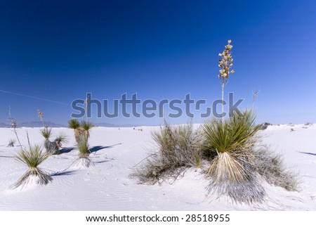 White Sands National Park #28518955