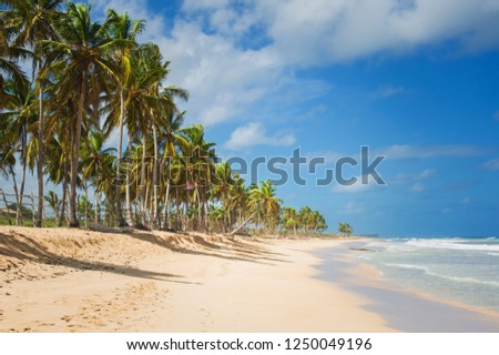 white sandy beaches on the island with coconut palms above the sea waves #1250049196