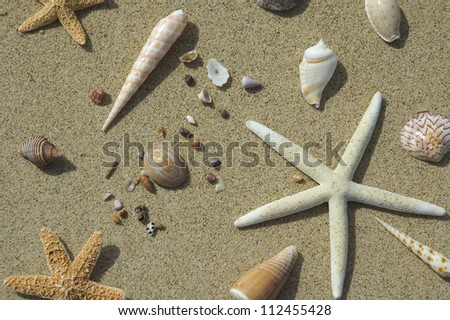 White sea star and shells on sand
