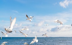 White seagulls flying over Baltic Sea in Poland