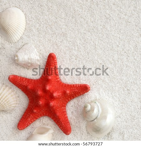 White seashells and red seastar on white sand - stock photo