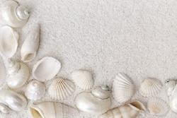 White seashells on white sand
