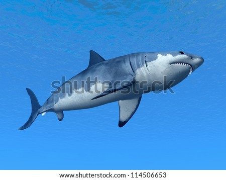 White Shark Computer generated 3D illustration
