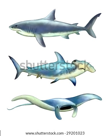 White shark, hammer fish and manta ray. Digital illustration.