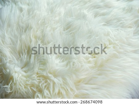 White sheep skin