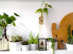 White shelf with multiple succulent plants and framed taxidermy insect art of a colorful red beetle