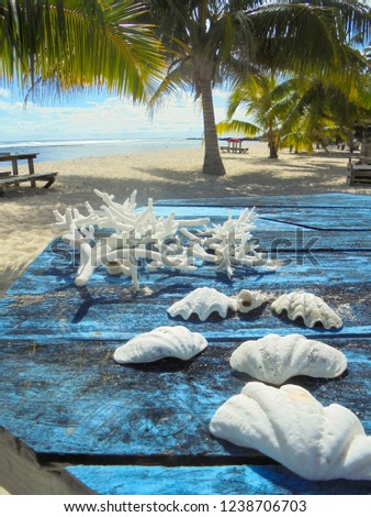 white shells and corals on blue table on Falealupo paradise beach with palm trees, Savaii island, Samoa, South Pacific, Oceania