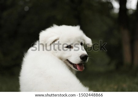 White shepherd puppy dog in green forest #1502448866