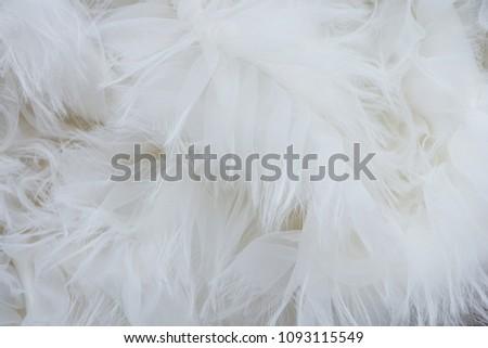 White silk feathers background, Soft chiffon curve  wave. #1093115549
