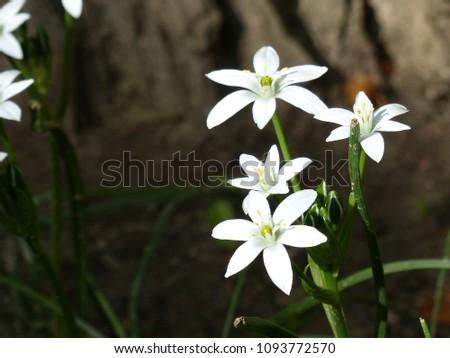 Free Photos Six Petal Flower Avopix