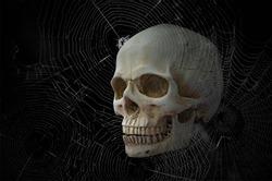 White skull and spider web on black background