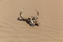 white skull with horns on the sand under the scorching sun