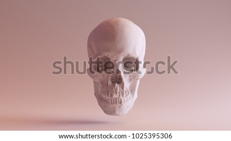 White Skull with Jaw Closed 3d illustration scsuvizlab CC Attribution