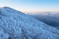 White snow and hoarfrost on the trees against sea of cloud at Taebaeksan Mountain near Taebaek-si, South Korea