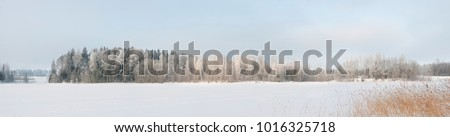White snow and ice on lake field and frost on forest trees at coast with grass in cold winter bright sunny day clear blue sky light #1016325718