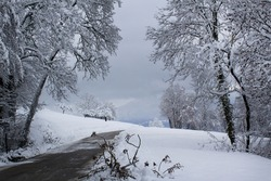 White snow rural alps mountains valley with trees and drive road beautiful wintery scene
