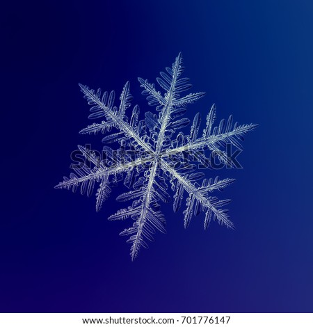 White snowflake on blue background. Real snowflake macro photo: large stellar dendrite snow crystal with fine hexagonal symmetry, complex and elegant shape and long, ornate arms with side branches.