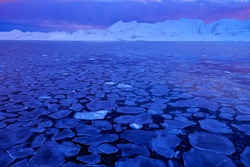 White snowy mountain, blue glacier Svalbard, Norway. Ice in the ocean. Pink clouds with ice floe. Dark landscape picture.