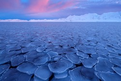 White snowy mountain on Svalbard, Norway. Ice in ocean, twilight in North pole. Pink clouds with ice floe. Beautiful landscape cold nature.