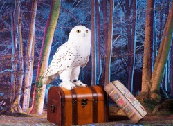 White Snowy Owl Standing on trunk in forest scene